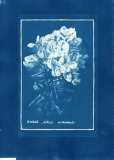 cyanotype003-for-web