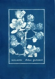 cyanotype004-for-web