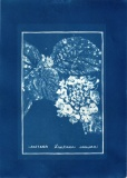 cyanotype005-for-web