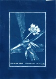 cyanotype006-for-web