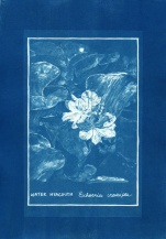 cyanotype008-for-web