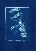 cyanotype009-for-web