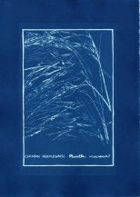 cyanotype010-for-web