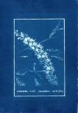 cyanotype012-for-web