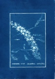 cyanotype012-for-web